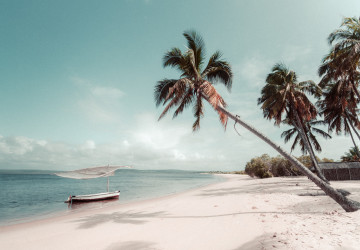 dhow boat on calm sea with a palm tree hanging over the beach