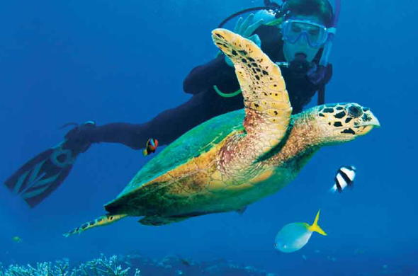 2 people diving with a turtle
